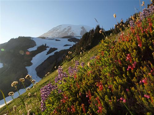 Paradise at Mt Rainier