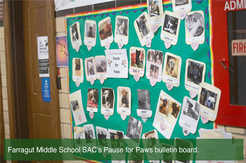 Bulliton Board - Pause for Paws